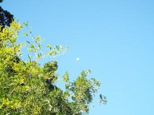 台風一過の空に月