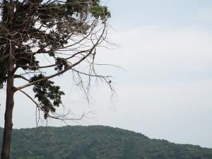 鳥の止まる木中景