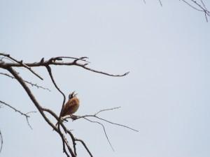 鳥の止まる木近景
