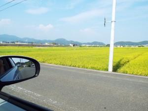 田んぼの風景1